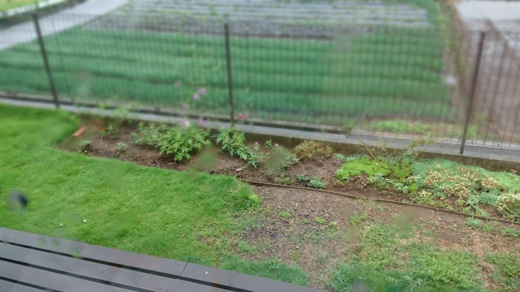 ガーデニング_改造_自分で_荒れた庭_庭作り